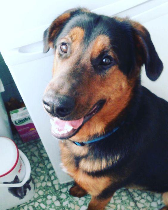 El guapo de Sherlock nos desea un feliz lunes!!! #sherlock #mixdog #puppy #picoftheday #dogs #dog #cachorro #adiestramiento #adiestramientomadrid #guapo #perroguapo #love by elperropirata