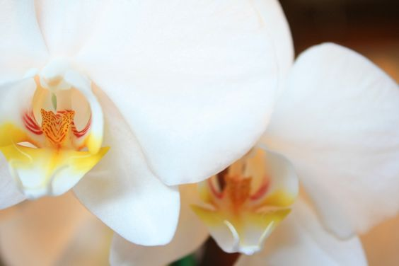 orchids. Just amazing.