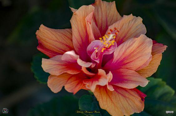 Explore Alberto Márquez Marín's photos on Flickr. Alberto Márquez Marín has uploaded 663 photos to Flickr.