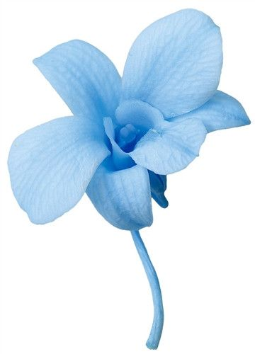 """Preserved Small Orchid Heads in Baby Blue 8 per Box Approximately 2.25"""" Diameter"""