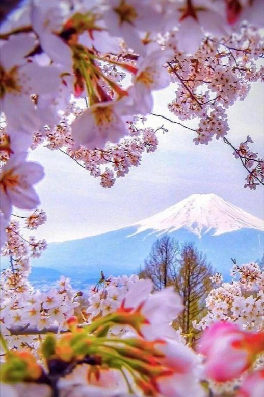 151 Mt Fuji Honshu Japan Cherry Blossom Japan Beautiful Landscape Photography Beautiful Nature Pictures