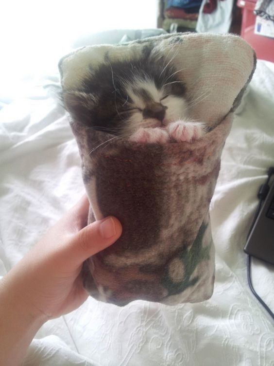 20 of the cutest sleepy kittens you'll come across