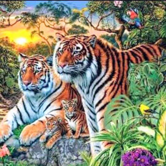 Foto Google Fotos Tigres Animais Foto 3d