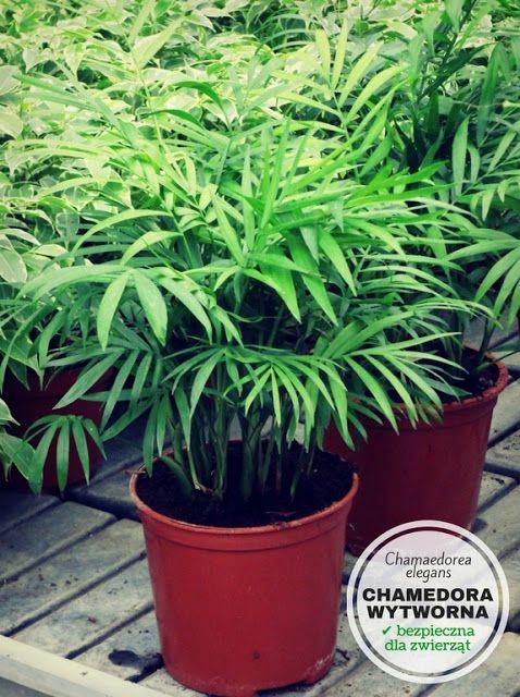 Rosliny Doniczkowe Bezpieczne Dla Psa I Kota Plants Flowers Nature