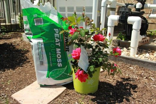 How To Plant Double Knockout Roses Knockout Roses Double Knockout Roses Double Knockout