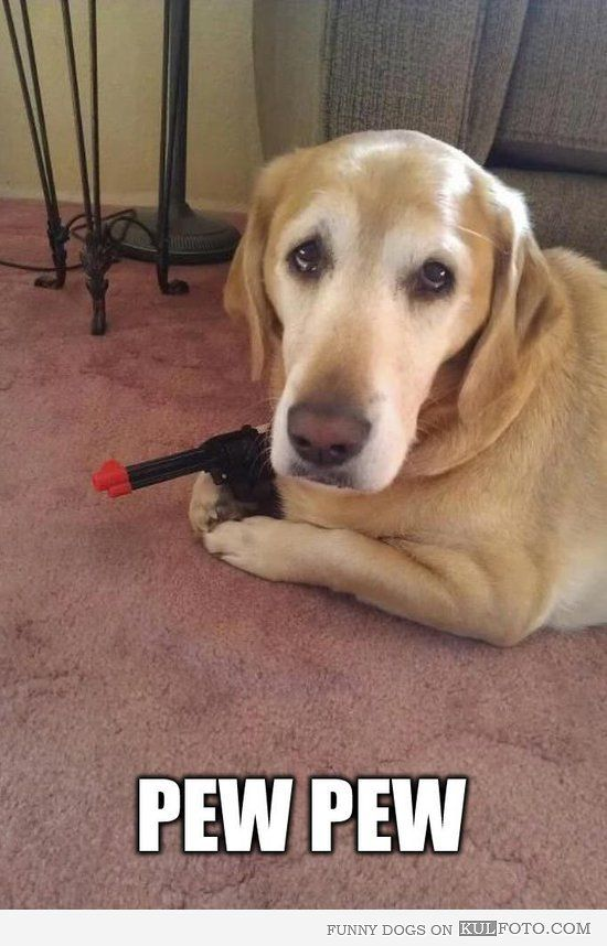 funny dog pics with guns - photo #14