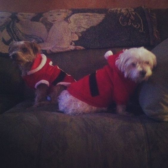 my babies in a  #santaclaus outfit  #puppies #christmaseve #cute #lovethem my babies in a  #santaclaus outfit  #puppies #christmaseve #cute #lovethem    Please 'Like', 'Repin' and 'Share'! Thanks :)