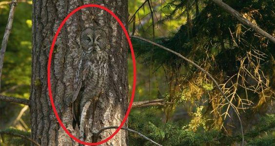 Camuflagem animal de grande cinza Coruja circundado