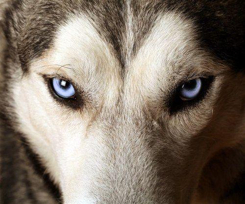 Olhos azuis!