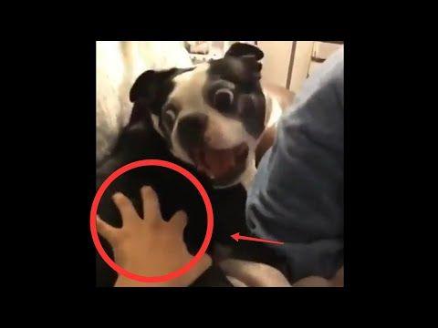 Video Lucu Anjing Kaget Shock Pake Banget Youtube Video Shock Youtube
