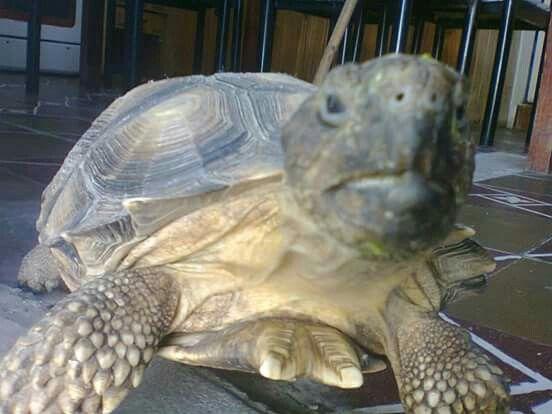 Mi amado Roger!!lo encontré re chiquitito vive en mi jardín,feliz , creció el doble es muy cariñoso, lo amo!!!!