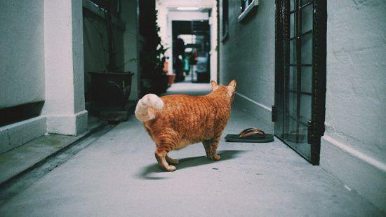 Prosense Liquid Cat Dewormer Solutions Review Cat Behavior Bad Cats Cat Dewormer
