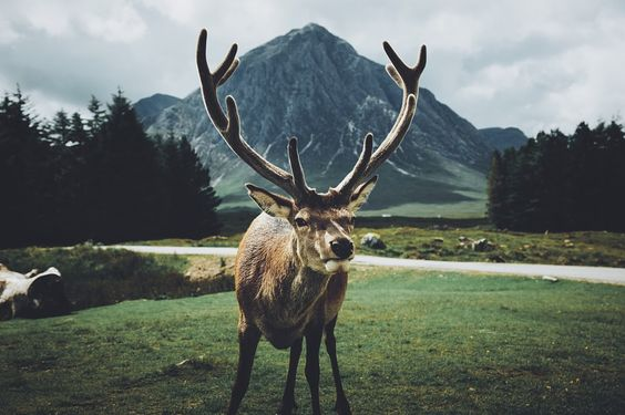 Stag by Daniel Casson #xemtvhay