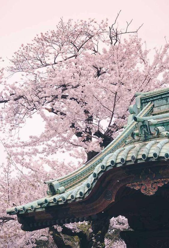 Primavera giapponese