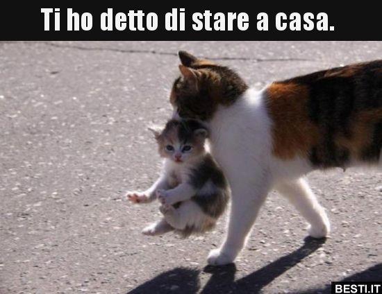 mamma gatta ha ragione - #iorestoacasa e come passo il tempo? - Virgilio  Forum