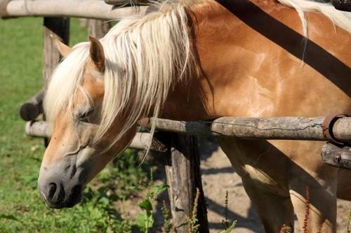 Friuli #Venezia #Giulia: #Morta calpestata dal cavallo verrà disposta l'autopsia (link: http://ift.tt/2cMPLhe )