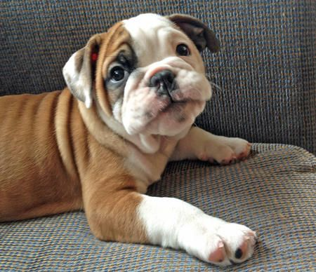 What a cute puppy! I think I'm in love. Just don't tell my kitty I said that.