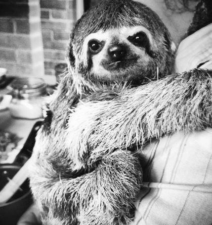I fucking love sloths ^_^