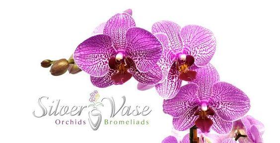 Silver Vase Orchids Bromeliads Silvervase On Pinterest