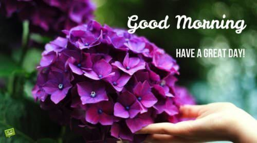 Fresh Inspirational Good Morning Quotes for the Day | Get on the Right  Track | Growing hydrangeas, When to prune hydrangeas, Planting hydrangeas