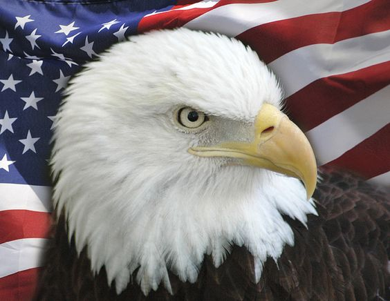 eagle and us flag