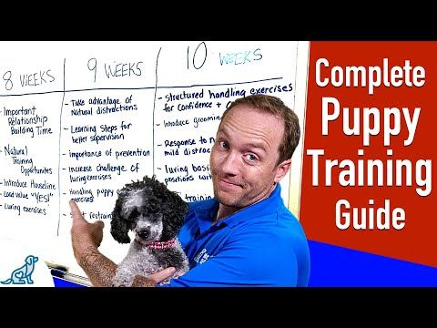 Your Complete Puppy Training Schedule By Age Youtube In 2020 Puppy Training Schedule Crate Training Puppy Puppy Training