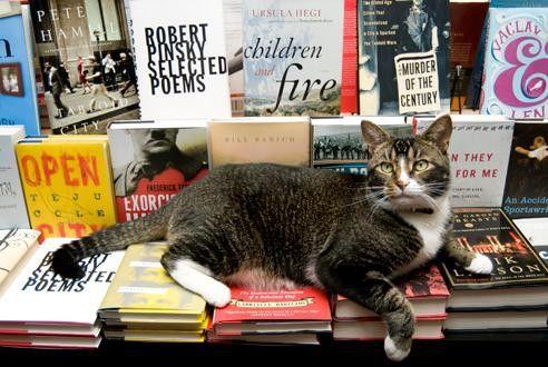 cat   books = ♥