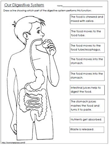 Digestive System Worksheet   Improving Small Minds   Pinterest ...