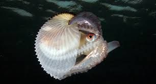 Image result for nautilus shell symbolism