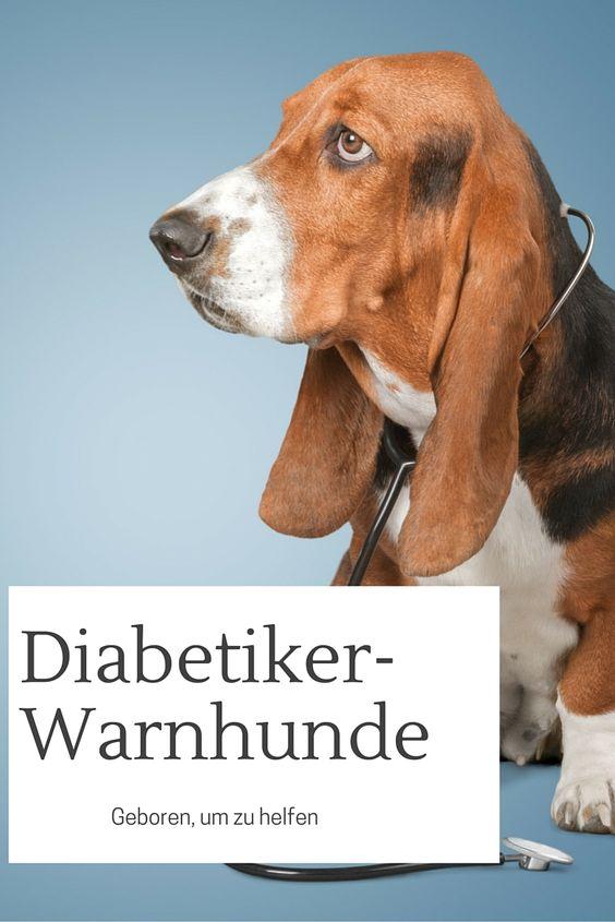 Es ist immer wieder erstaunlich, was Hunde alles leisten können - zum Beispiel als Diabetiker-Warnhund. Mehr Infos nach dem Klick