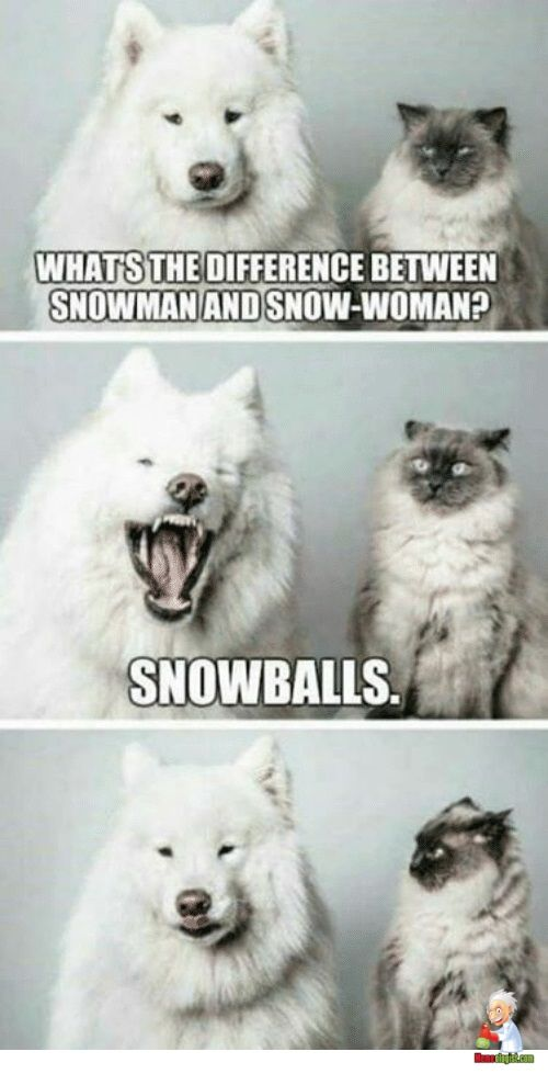 Funny Snow Memes Funny Dog Memes Funny Animal Pictures Animal Memes