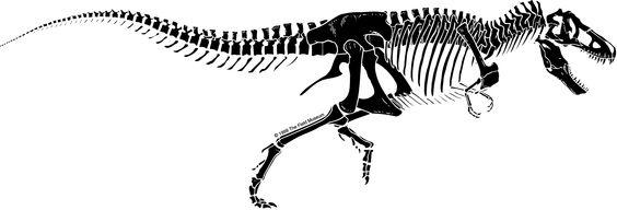 Rex Skeleton Silhouette \x3cb\x3et rex skeleton\x3c/b\x3e cleveland ...