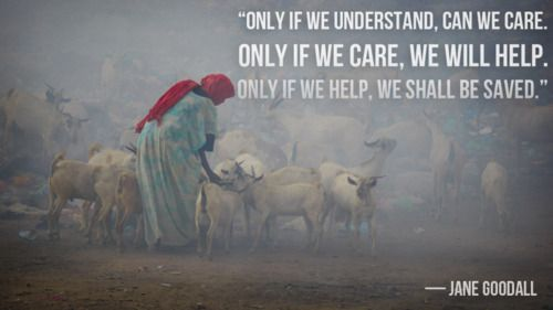 """#quote """"Only if we understand can we care, only if we care, we will help, only if we help, we shall be saved."""" -Jane Goodall"""