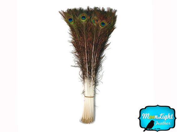"""Wholesale Feathers, 10 Pieces - 30-35"""" NATURAL Peacock Tail Eye Wholesale Feathers (bulk) : 3349 $14.95"""