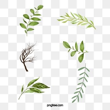 Watercolor Leaves Png Images Vector And Psd Files Free Download On Pngtree Cherry Blossom Watercolor Watercolor Leaves Flower Painting