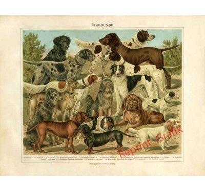 Zwierzęta Psy myśliwskie Jamnik Aporter Bloodhound Posokowiec Chart PIĘKNA…