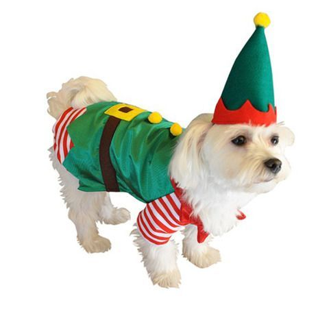 Christmas Elf Outfits For Dogs Ideas 2018 Dog Fashion Elfoutfit