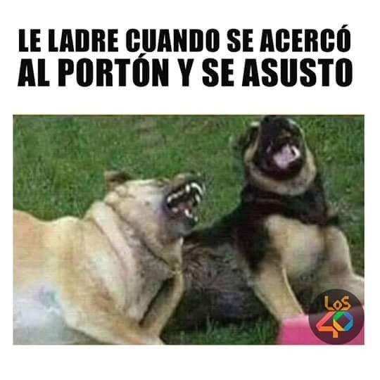 Pin De Areli Cotardo En Chistosadas Memes De Animales Divertidos Frases Divertidas Sobre Animales Fotos De Perros Graciosas