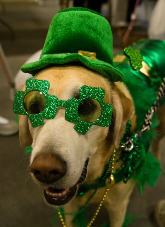 LOL @ St. Patty's pup, I loves him! We have those shades in light up style as well, aw yeah:  http://www.flashingblinkylights.com/stpatricksday-c-115_25.html?osCsid=b1i0bqj8u8gq84u9it1t19euv5: