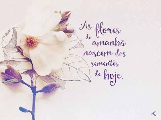 as flores de amanhã nascem das sementes de hoje: