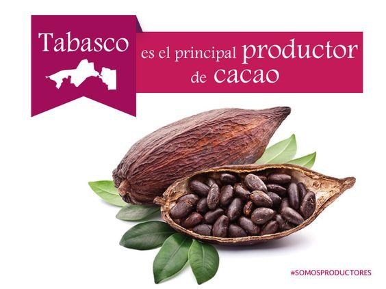 Tabasco es el principal productor de cacao. SAGARPA SAGARPAMX #SomosProductores