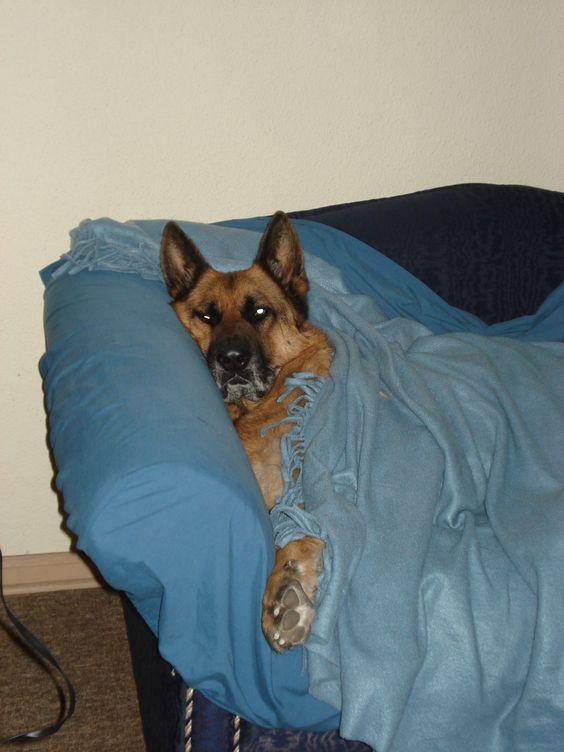Acostado en el sofá.