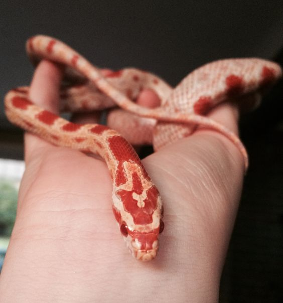 Photogenic snake