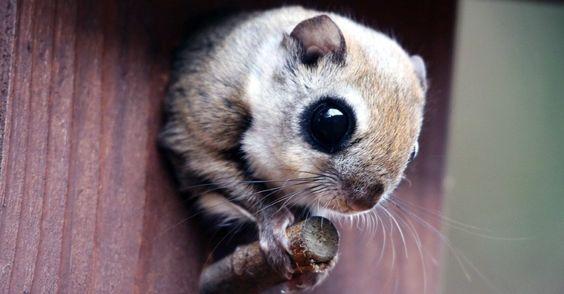 Esquilo sai de um ninho artificial no Parque Nacional Mount Songni, na Coreia do Sul.