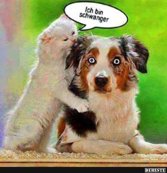 Besten Bilder Videos Und Spruche Und Es Kommen Taglich Neue Lustige Facebook Bilder Auf Debeste De Hier We Lustige Hund Bilder Witzige Tierbilder Katzenhumor