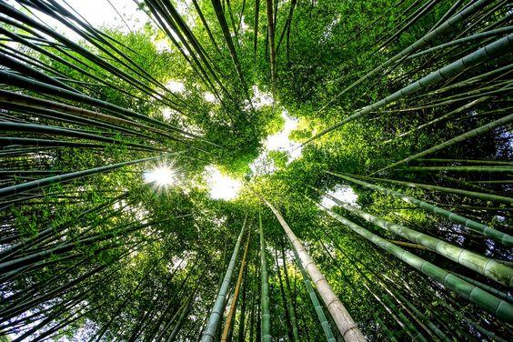 Be Like Bamboo