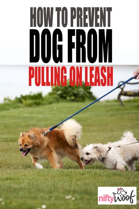 How To Stop Your Dog From Pulling On The Leash Training Your Dog