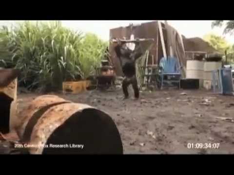 Affe Mit Waffe Affe Mit Ak47 Ak47 Affen Und Witzig