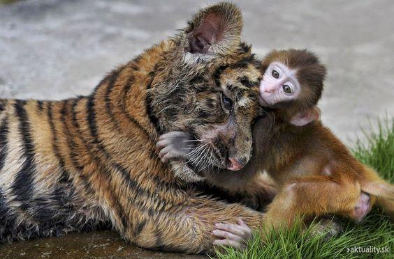 Você faz a Diferença: Coragem é um amor sem medo