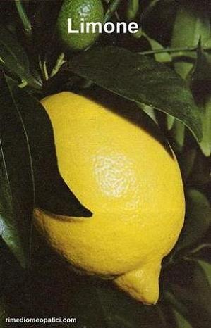 LIMONE:  strofinare la guancia affetta da nevralgia facciale con mezzo limone.